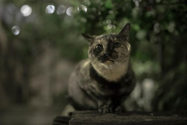 night cats enlight1
