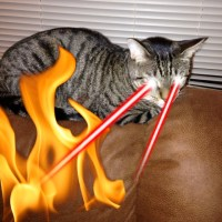 So here's what I learned about cats and candles.