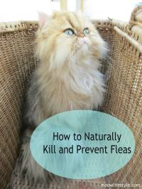 how to kill dog fleas in the house - 28 images - 16 home ...