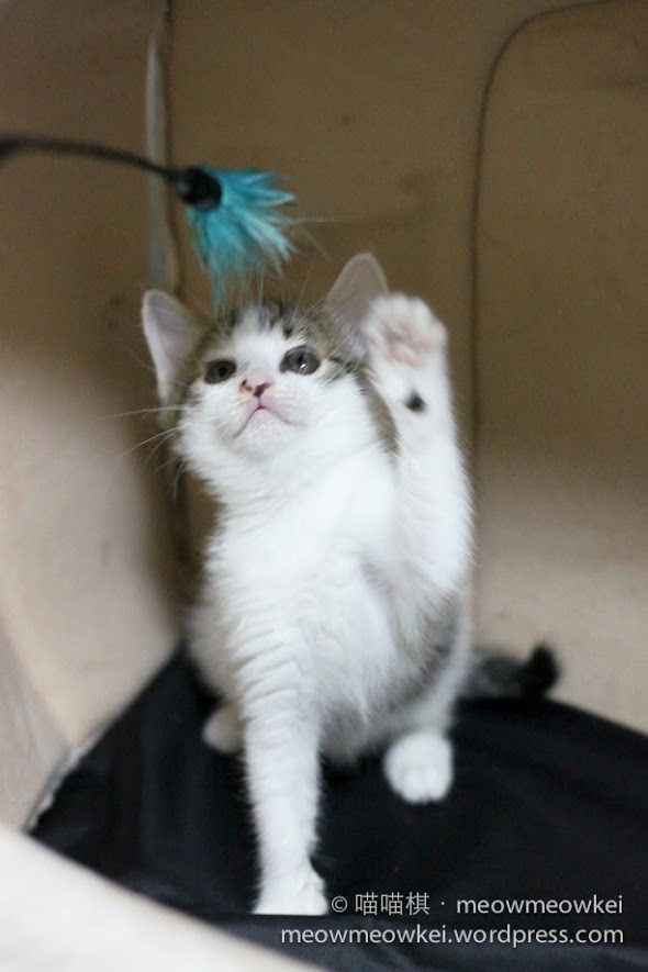 小仙子小精靈(10)左手傷口癒合了 | 貓貓棋遇記