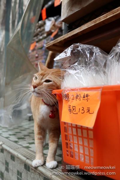 旺妹在貨架磨蹭   貓貓棋遇記