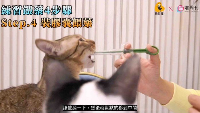 2021 03 18 下午1.01.10 8 edited scaled | 喵周刊 Meow Weekly