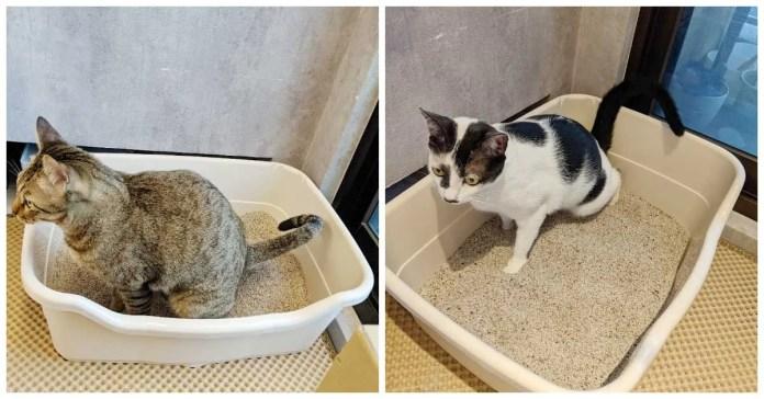 3 | 喵周刊 Meow Weekly