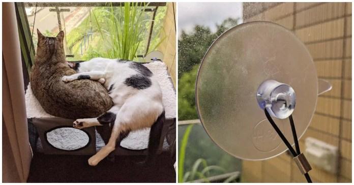 2 | 喵周刊 Meow Weekly