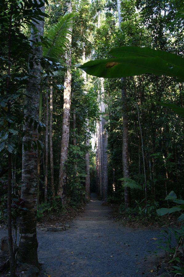 Kauri avenue