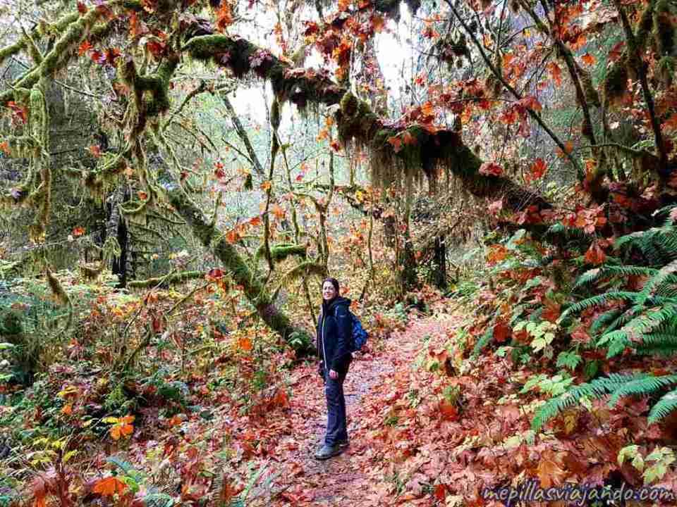 Hoh, el bosque de lluvia