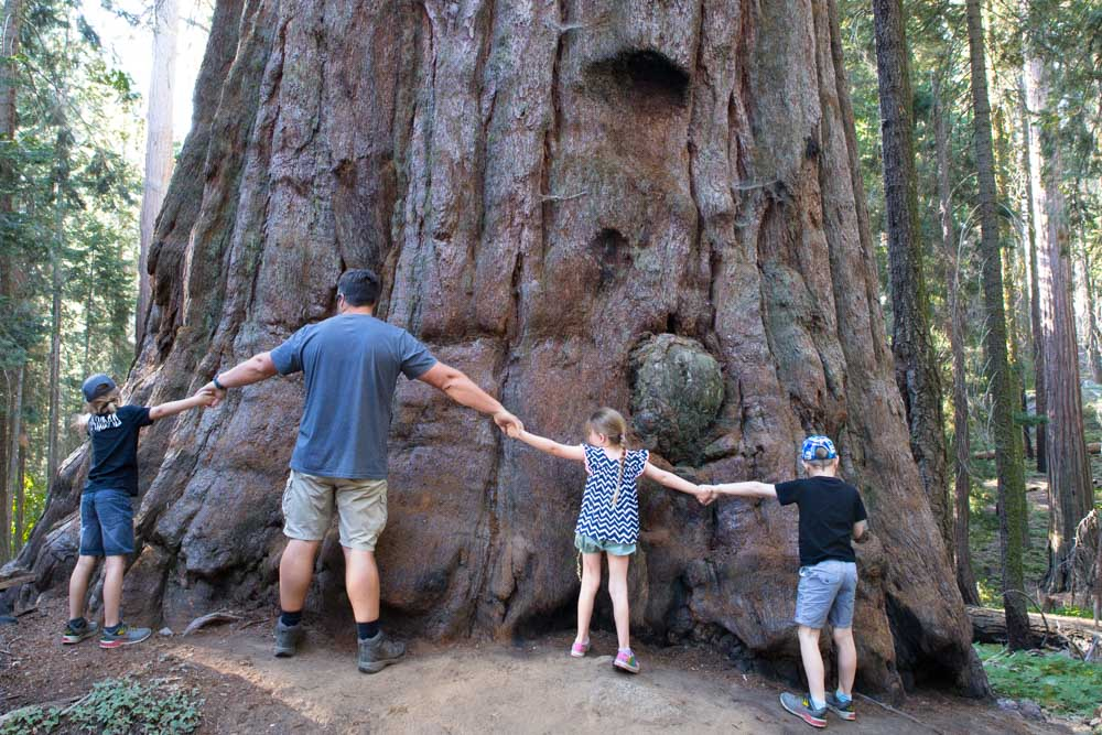 Sequoia National Park What To Do With Kids Meraki Mother