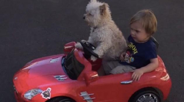 Cachorro dirigindo um carro elétrico