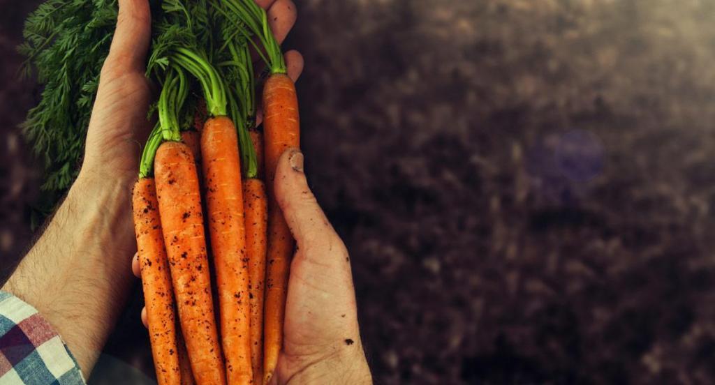 Grupo Carrefour Brasil divulga seu Relatório de Sustentabilidade 2019