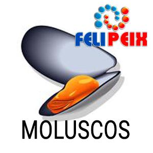 04 MOLUSCOS