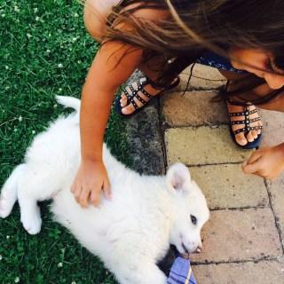 Impariamo a crescere con un pet?