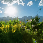 Summer in Jackson Hole: Video from JHMR