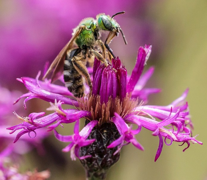 Tulpehaking Nature Center to Hold a Build a Bee Abode Workshop
