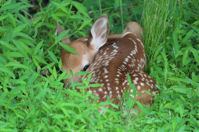 Hopewell Valley Residents Asked to Participate in Deer Survey Online