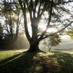 D&R Greenway Sentinel Oak, Jim Amon