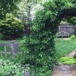 Hw-Garden