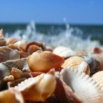SEASHELLS BY THE SEASHORE with wave from Internet