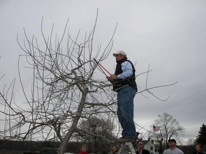 Terhune Orchards to Hold Free Annual Pruning Demonstration