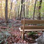 Poetry and Nature image BENCH and Forest