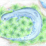 Blue-spotted Salamander Mercer County Winner by Oishee Sinharay Pennington