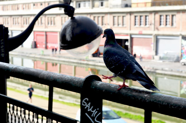 mercredie-blog-mode-canal-st-martin-pigeons