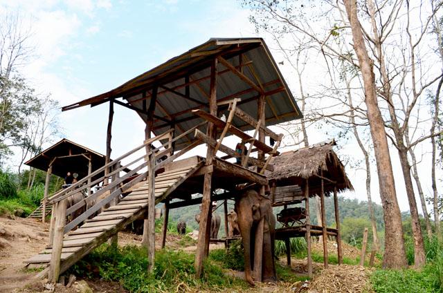 mercredie-blog-mode-voyage-thailande-elephants-chiang-mai-2