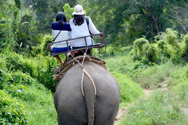 mercredie-blog-mode-voyage-thailande-elephants-chiang-mai-3