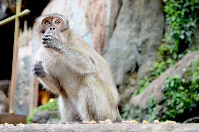 mercredie-blog-mode-voyage-thailande-singe-mange