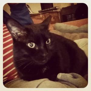 my cat Oberon