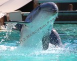 2013 Friendly dolphin