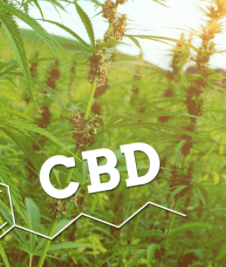 Dr. Johannes Ramirez Boden - Continuing the discussion on CBD