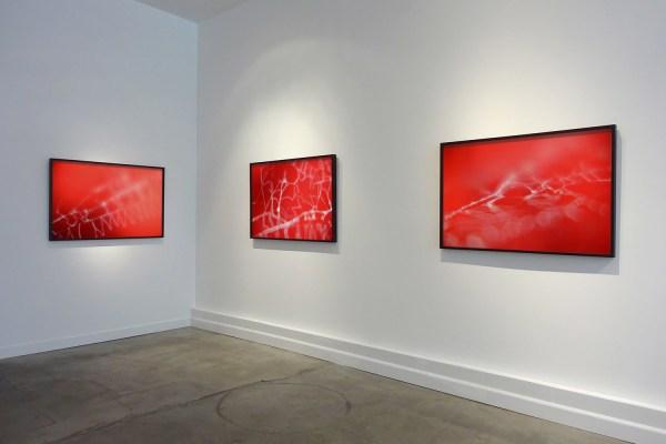 Installation view Scylla & Charybdis (2015) by Chris Komater. L-R Untitled (Spider Webs #601, #595, #608), digital C-prints, 30 x 45 each