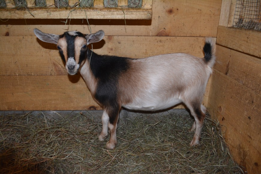 4*M Old Mountain Farm Zell Lee