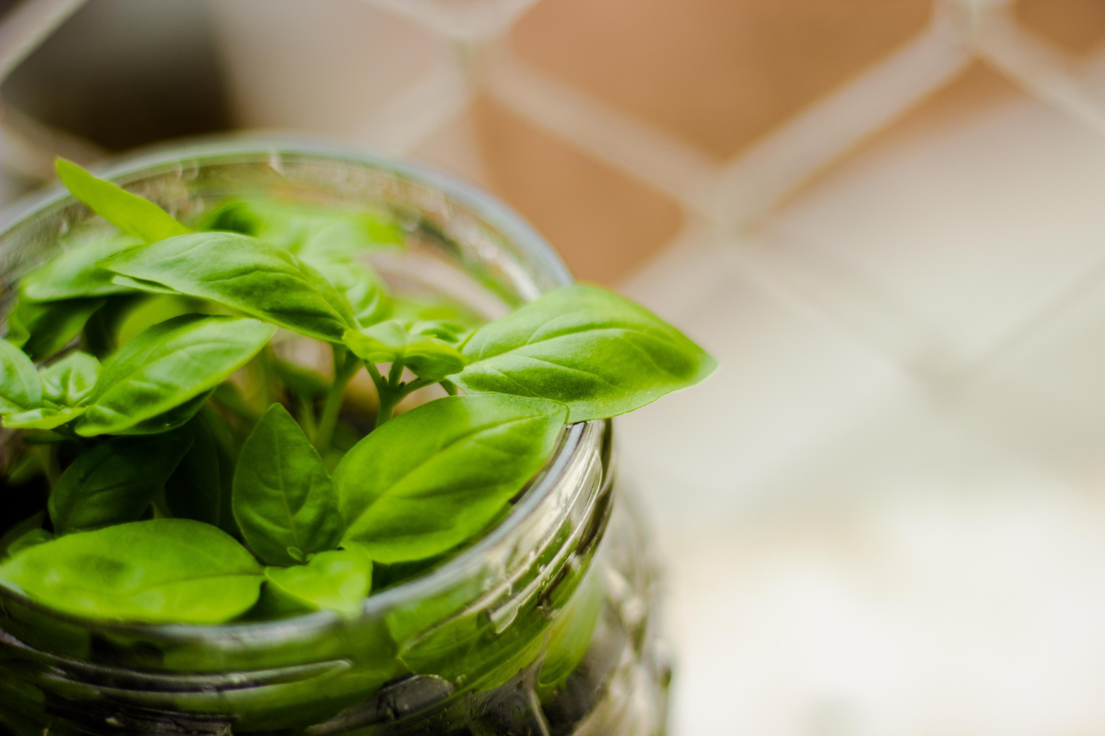 Essential Oils for Kitchen Smells