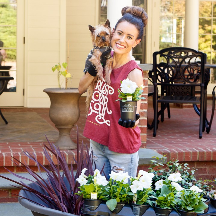 Planting Fun and Easy Fall Flowers and Plants with Autumn Colors for the Beginner Gardener- DIY