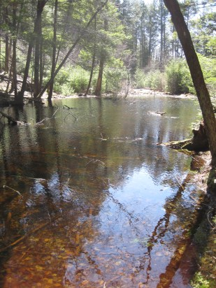 A study pond in the Yale Myers Forest, CT