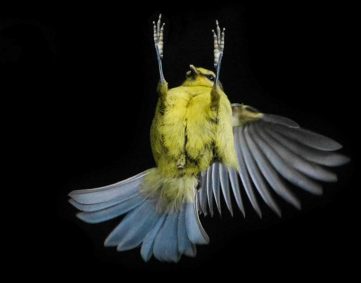 feeling_lost_good_thing_bird_falling