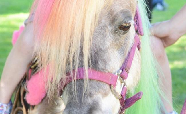 Horse And Pony 3 Year Old Birthday Party Meri Cherry