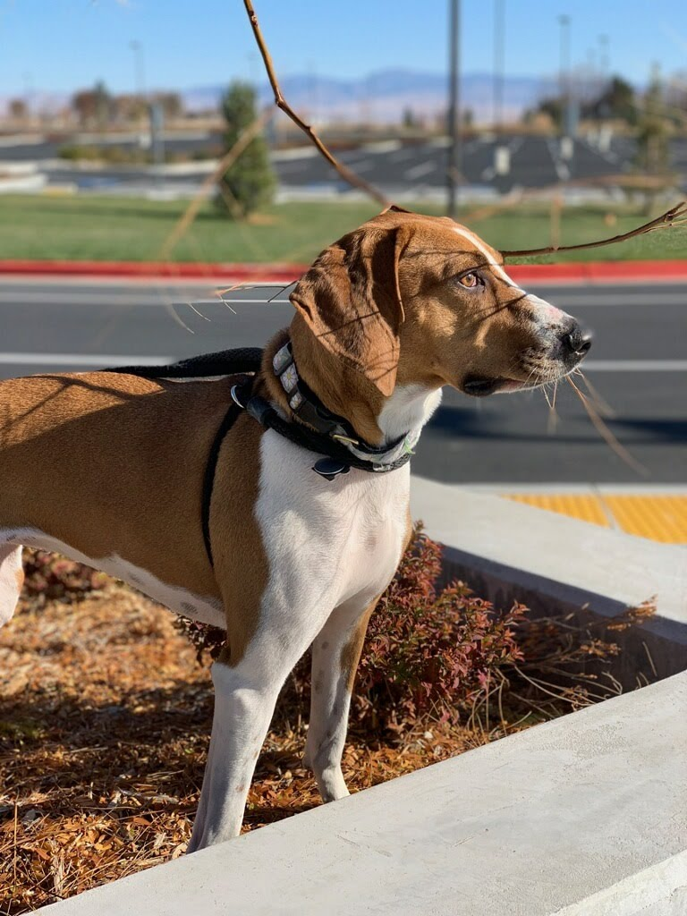 Home - Meridian Canine Rescue