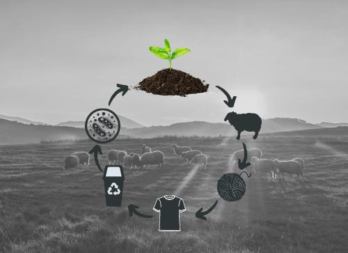 Merino wool sustainability and renewability