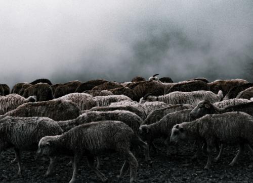 Merino livestock emissions