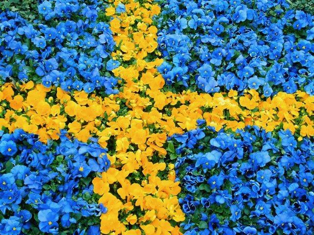 Sveriges nationaldag den 6 juni 2018