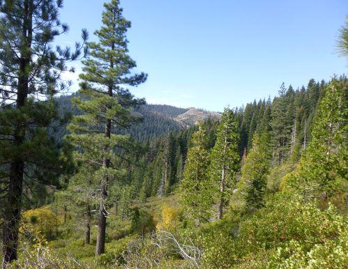 Lavezolla Creek Trail view