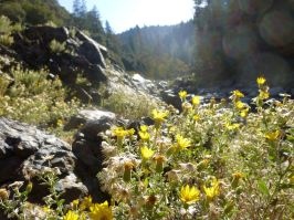 South Yuba, still some flowers. Must be lower elevation now.