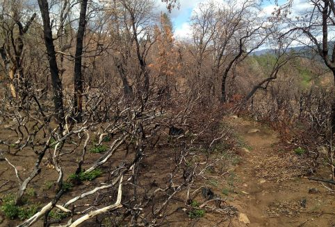 Trail #6, just burned completely over.