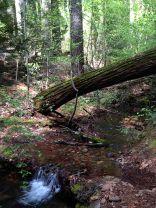 Trail6-creek