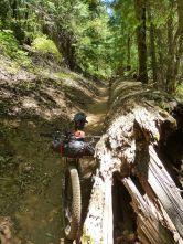The big downed log on 2nd Divide