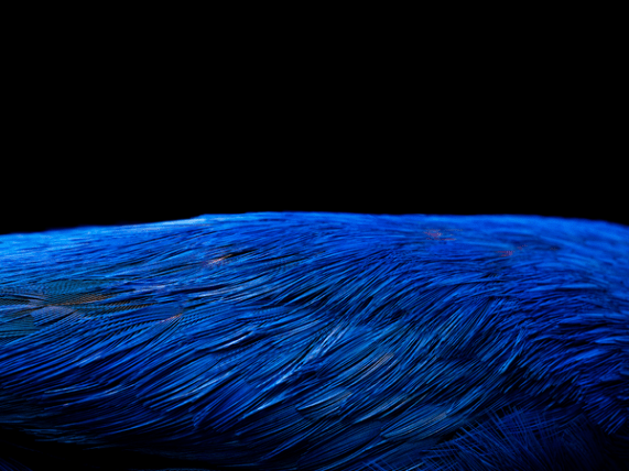 Beauty_Feathers