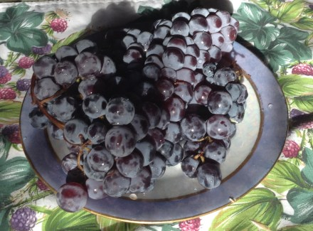 Fall Food Fiesta, Grapes