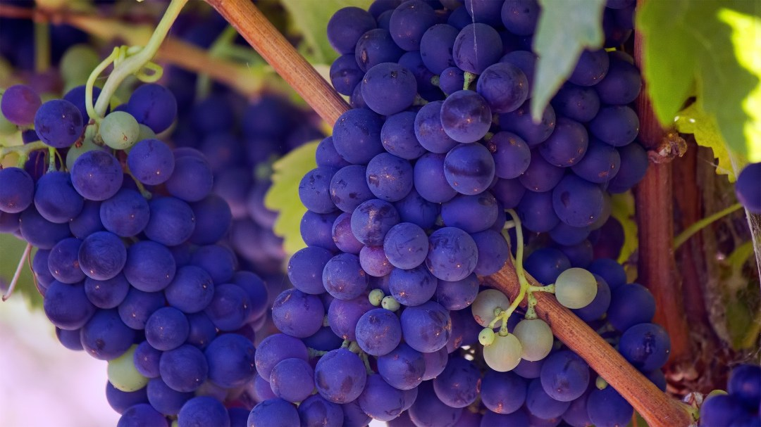 Grapes - a new years day food tradition